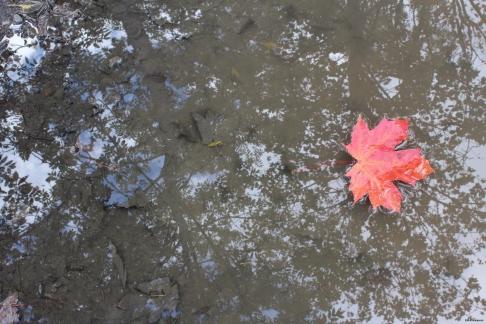 À terre, en l'air (18 janvier 2015) - À la fois l'arbre et la feuille, la terre et le ciel, l'ombre et le reflet.