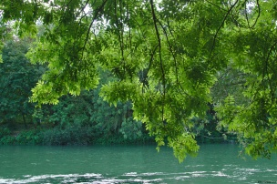 Plongée dans le vert