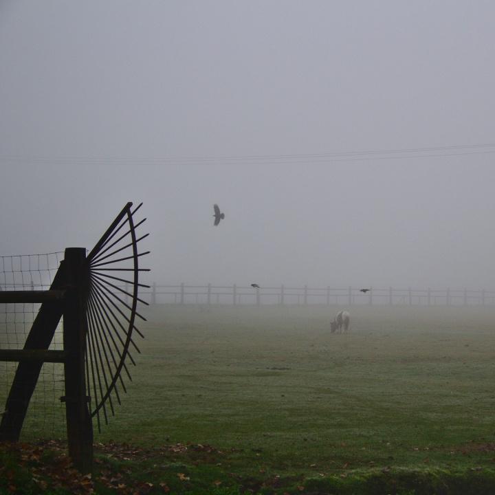 Brume de novembre