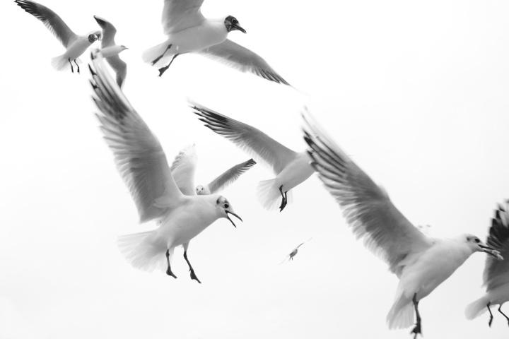2017_02_13_oiseaux_1