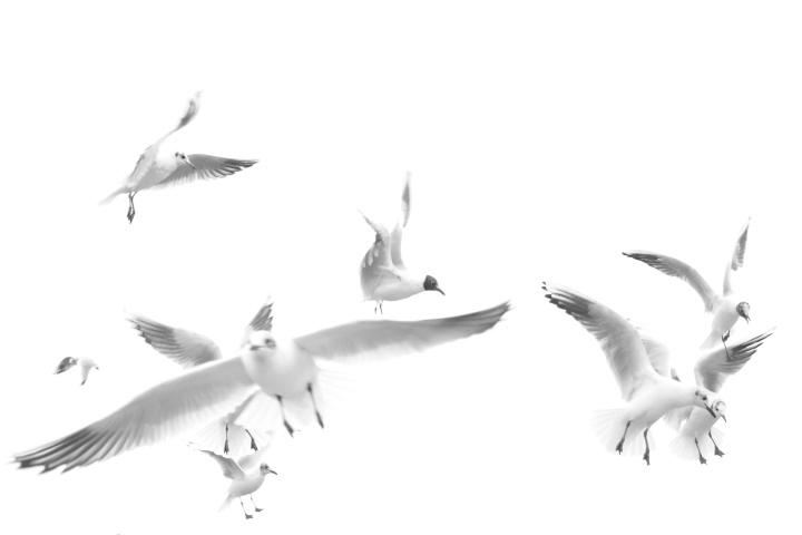 2017_02_13_oiseaux_2