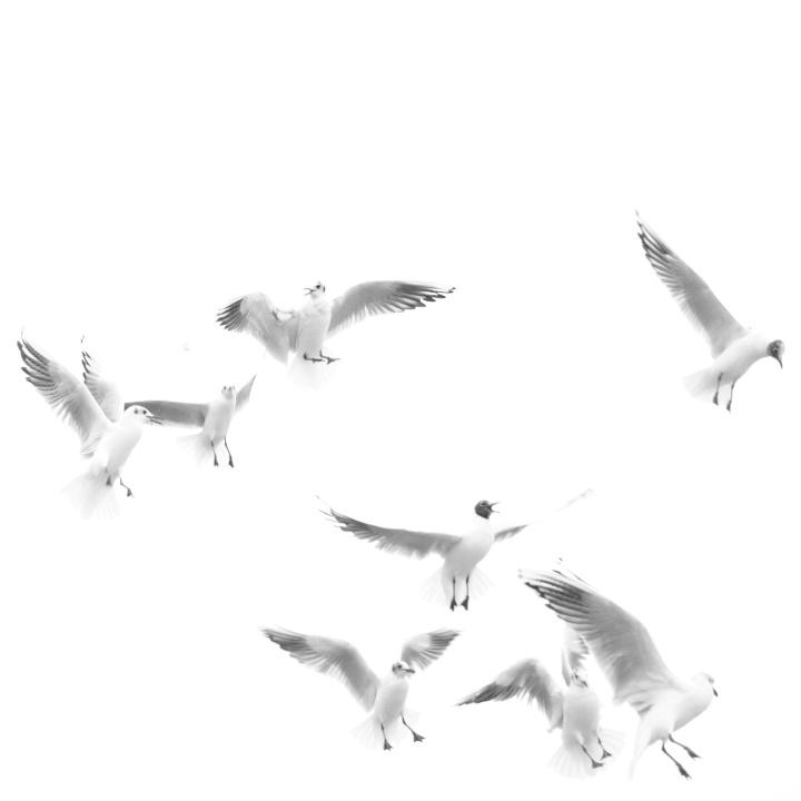 2017_02_13_oiseaux_3
