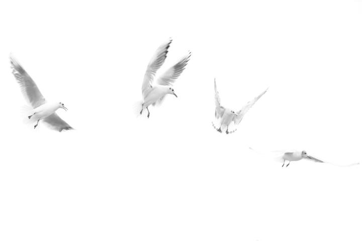 2017_02_13_oiseaux_4