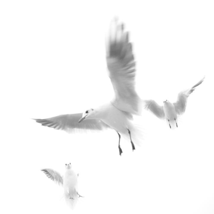 2017_02_13_oiseaux_5