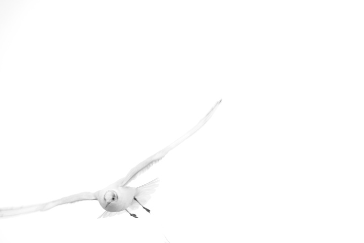 2017_02_13_oiseaux_6